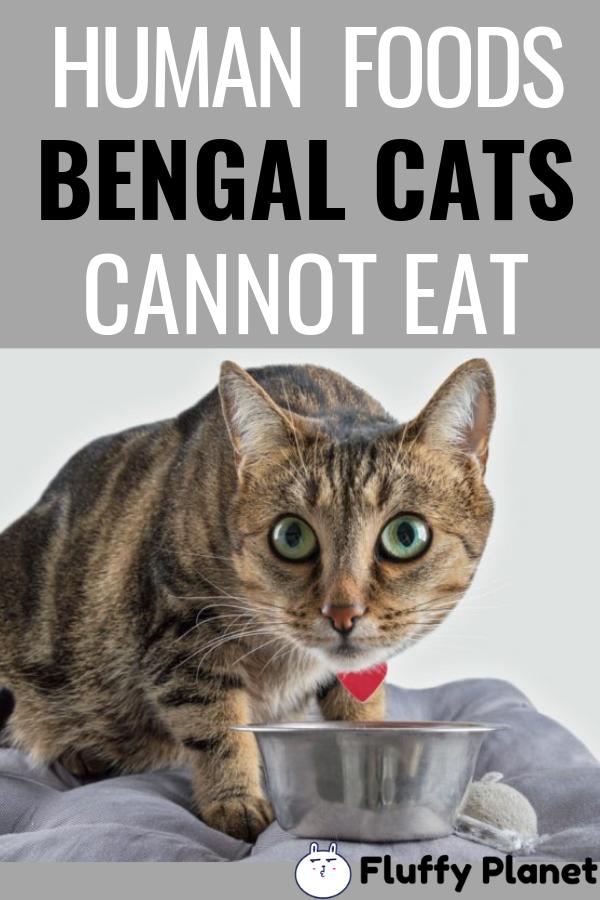 What Human Foods Can Bengal Cats Eat 2020 Bengal Cat Human Food Bengal