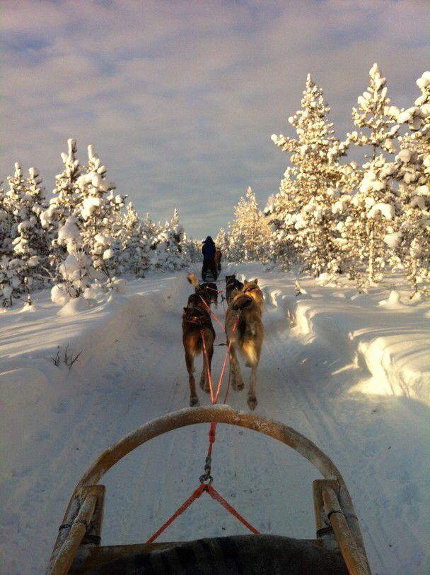 Es ist Schnee, hab Spaß und lauf den Hunden davon