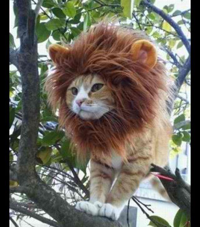 Meaw roar