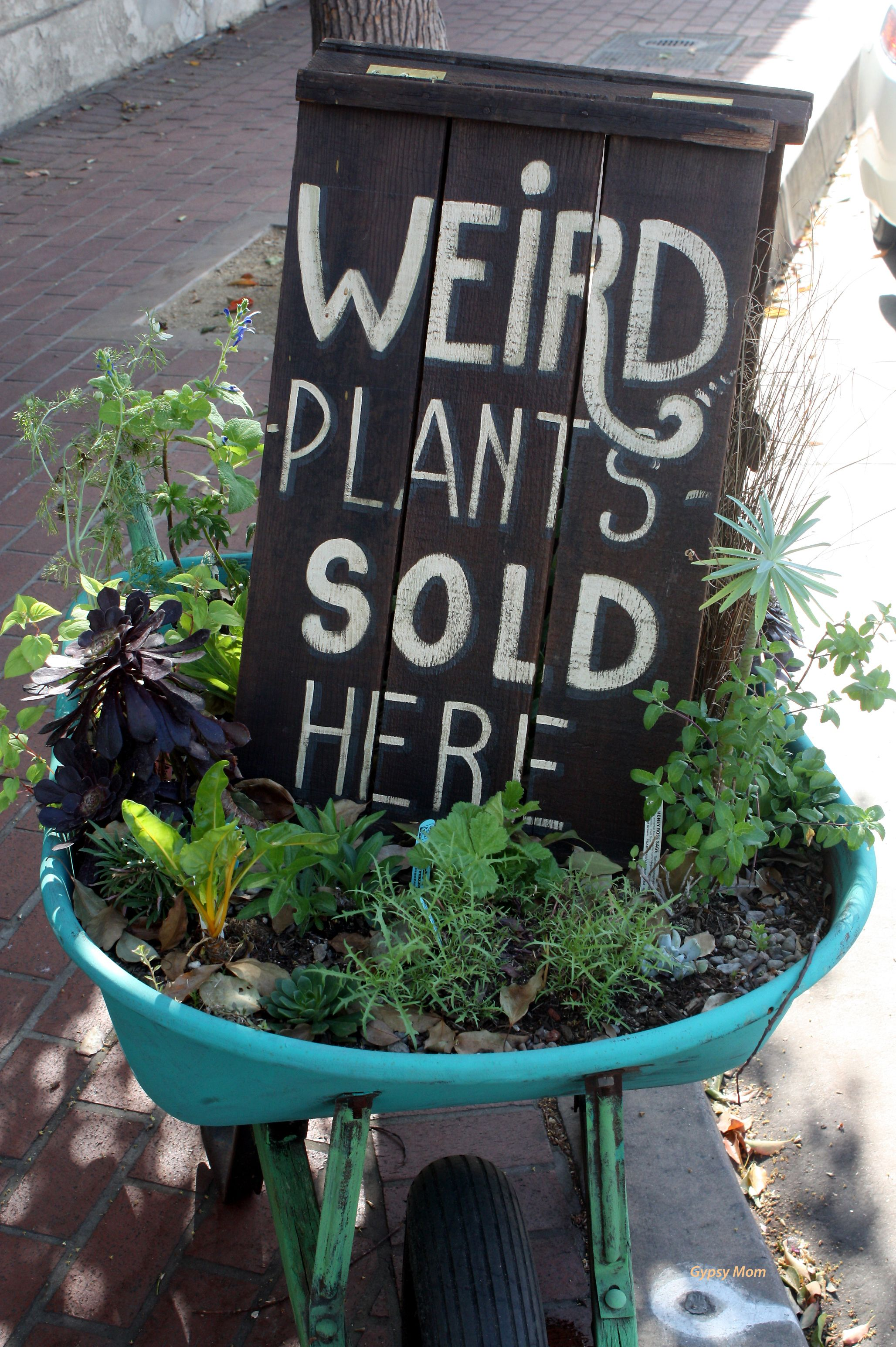 Sign in front of an antique store in Orange, CA! Garden