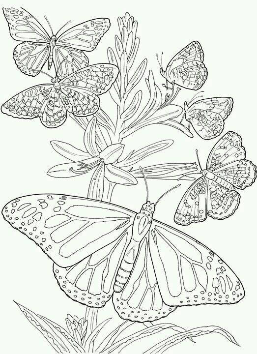 Adult Coloring Cluster If Butterflies Coloring Books For Adults