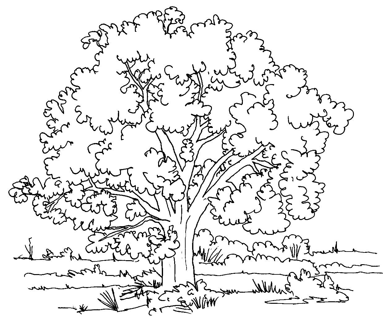 Nature Colouring Pictures For Kids Tree Coloring Page Free