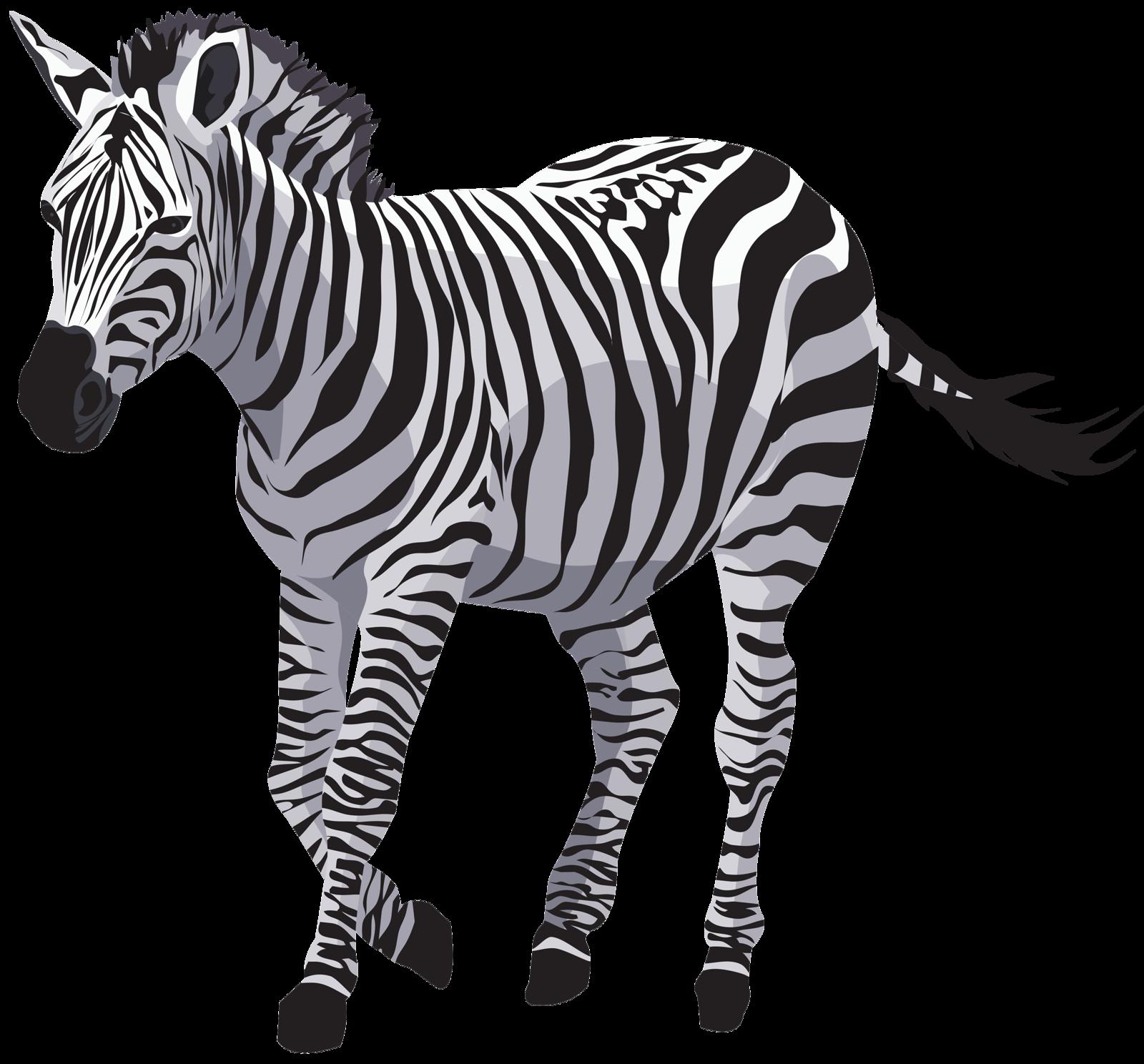 Надписью ксюша, картинки с зеброй для детей