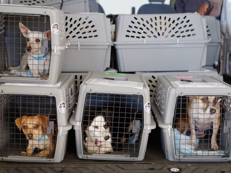 Reasons Why Hiring The Services Of A Pet Delivery Agency Is A Good Idea Pet Transport Dog Transport Pet Relocation