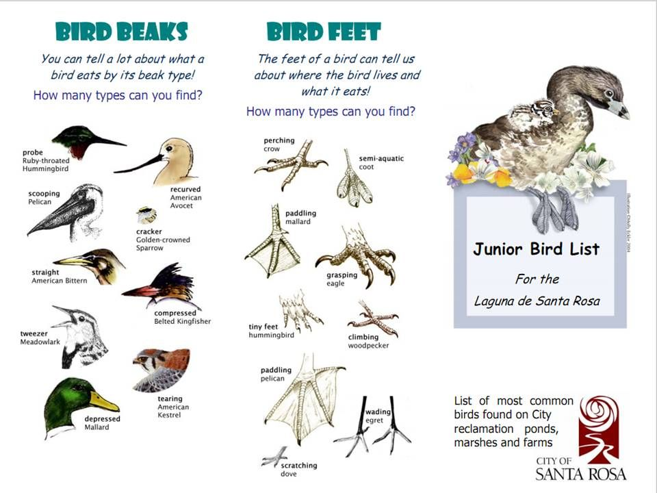 types of bird beaks and feet and what they are used for. | To ...