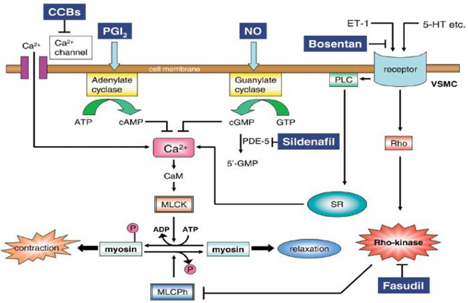 17 Best images about Pharm: Calcium Channel Blockers on Pinterest ...