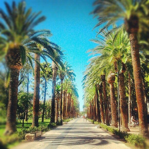 Le #palme di San Benedetto del Tronto, Bandiera blu #bellavallone