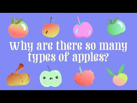 Have you ever walked into a grocery store and wondered where all the varieties of apples  came from? You might find SnapDragon, Pixie Crunch, Cosmic Crisp, Jazz,  or Ambrosia next to the more familiar Red Delicious and Granny Smith. So  why are there so many types? Theresa Doud describes the ins and outs of  breeding apples.