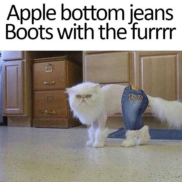 Apple bottom jeans Boots with the furrrr | CATS WITH CAPTIONS ...