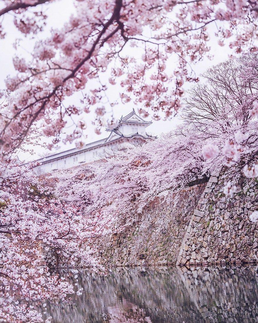 ロシア人写真家 日本の美しい春を紹介する おとぎ話の世界のような写真の数々に外国人が絶賛 海外の反応 風景 美しい 日本 の 風景