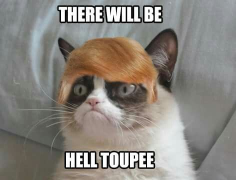 c4f358702eab175ff0534bab5545eec9 if you vote for donald trump grumpy cat pinterest donald