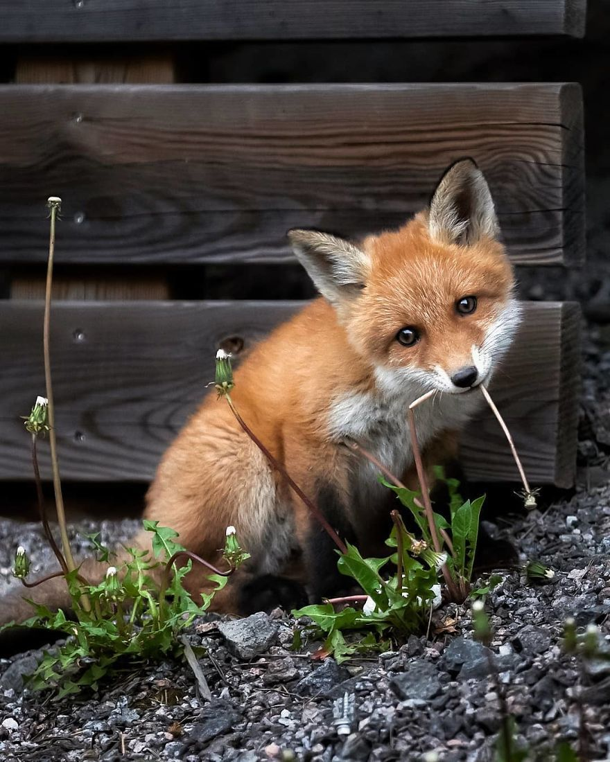 Photo of Finnish Photographer Captures Baby Animals Having Fun And Ma…