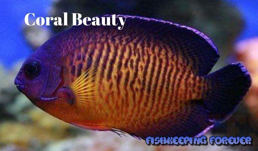 Pin On Aquarium Fish