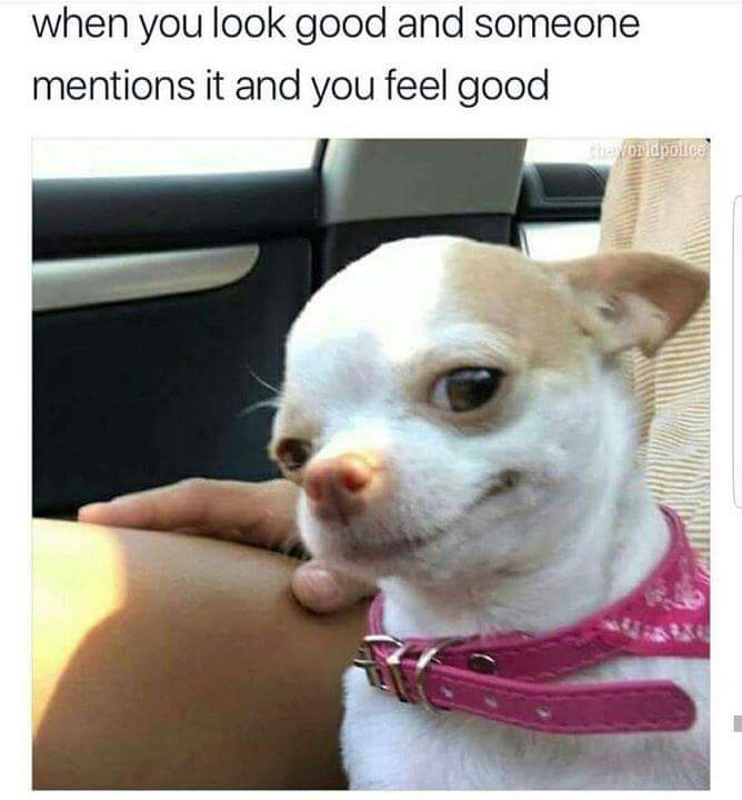 Hmm, I'm glad you noticed.  #LookGooFeelGood #Chihuahua #Smirk