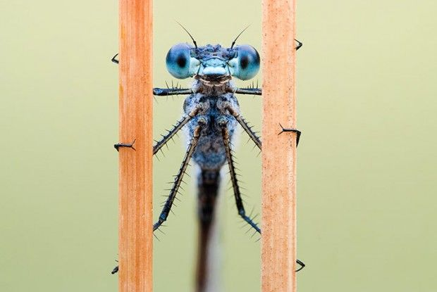 Mind-blowing Macro Photographs of Insects and Spiders by John Hallmen