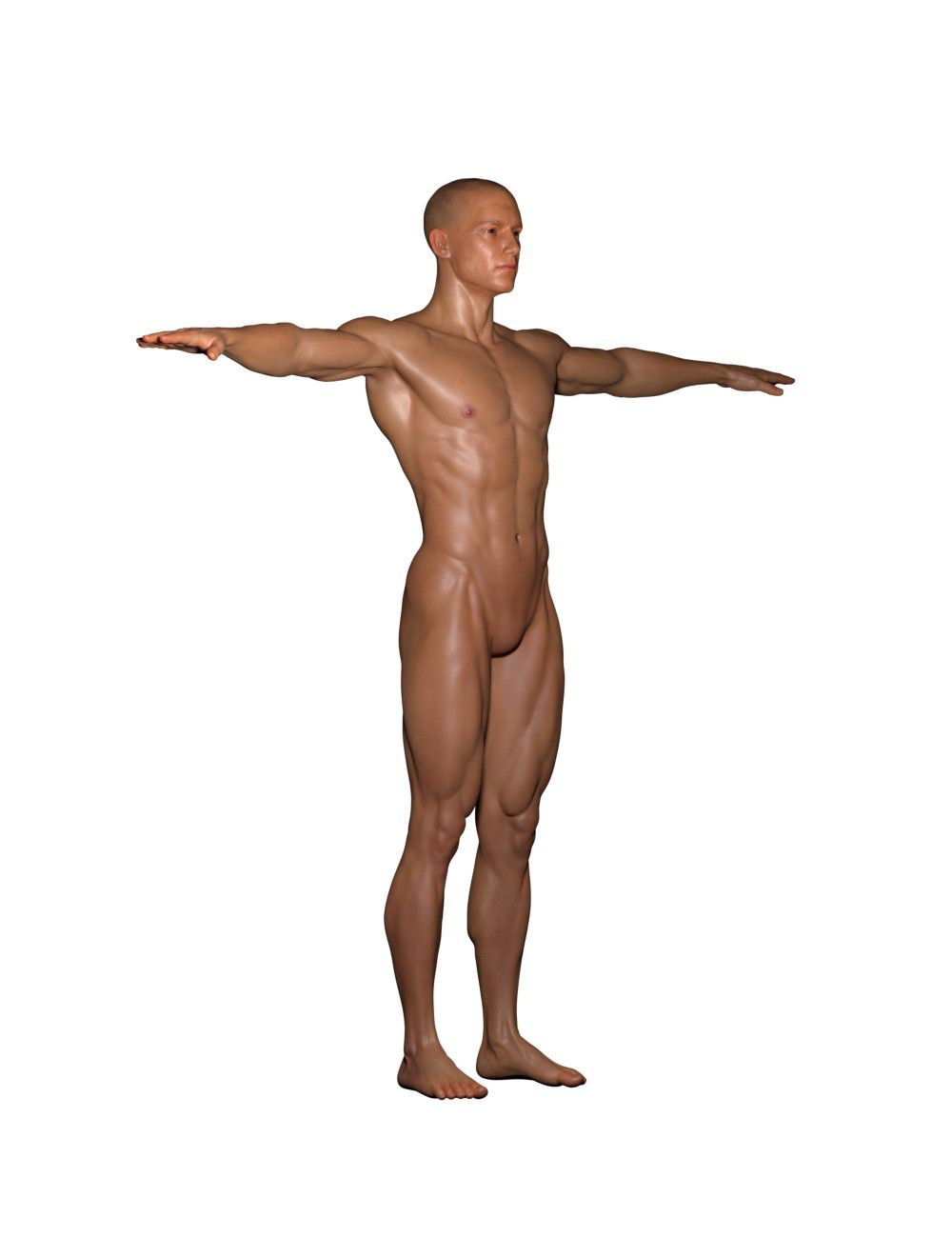 ArtStation - Male Anatomy references for Artists PDF is comming ...