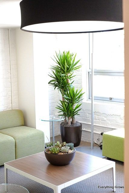 Bon Neat Example Of Desert Interior Plant Design Indoors. Our Everything Grows  Designer Nailed It With The Yucca Cane And The Succulent Bowl In This High  Light ...