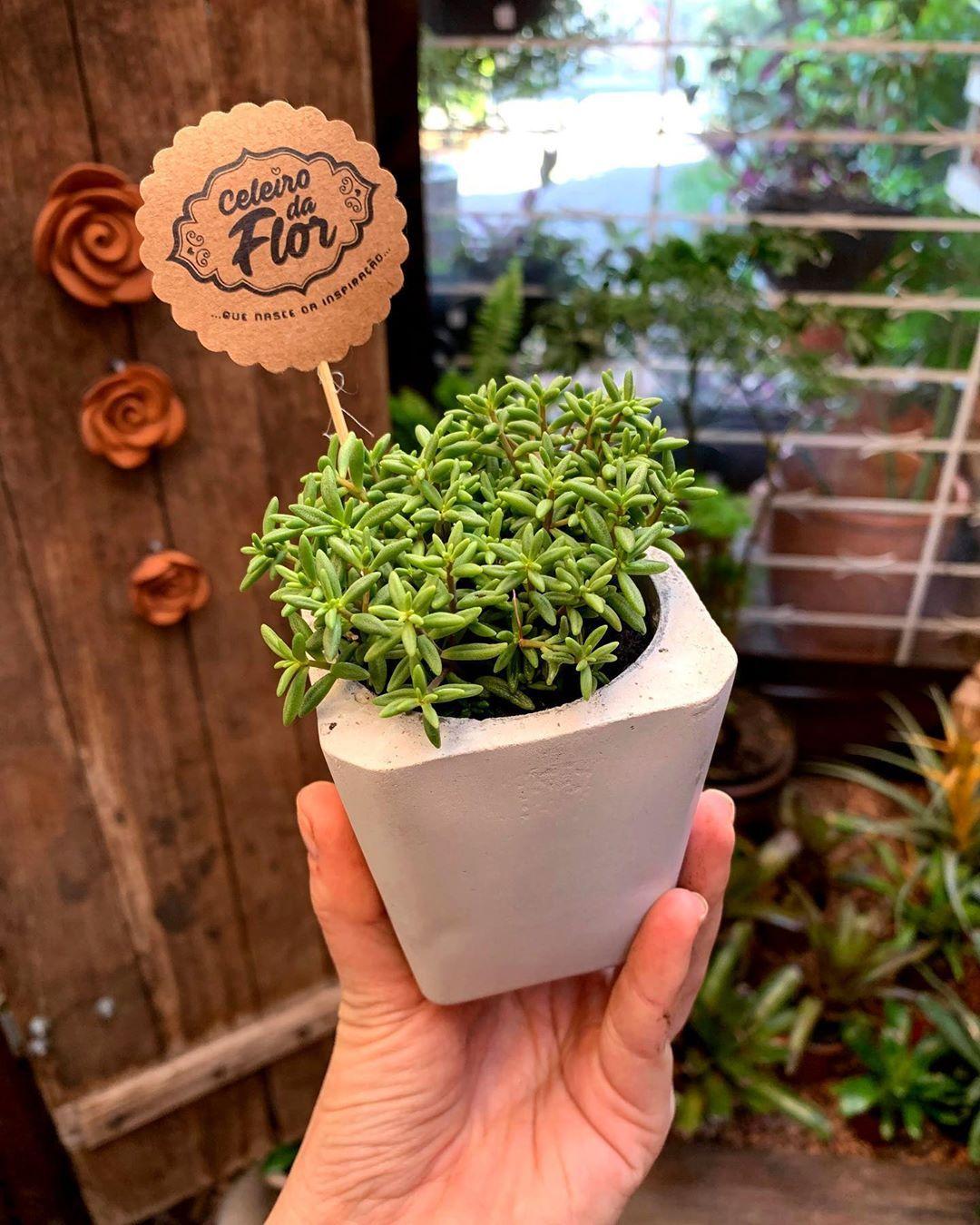 """Floricultura Celeiro da Flor 🌻 on Instagram: """"Dia de postar esses vasinhos que são a coisa MAIS LINDA DA VIDA! 🌿  Essas lindezas foram diretamente para Santa Cruz do Sul, embelezar o…"""""""
