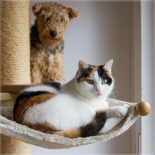 Nele Motte Cats Dog Cat Feline