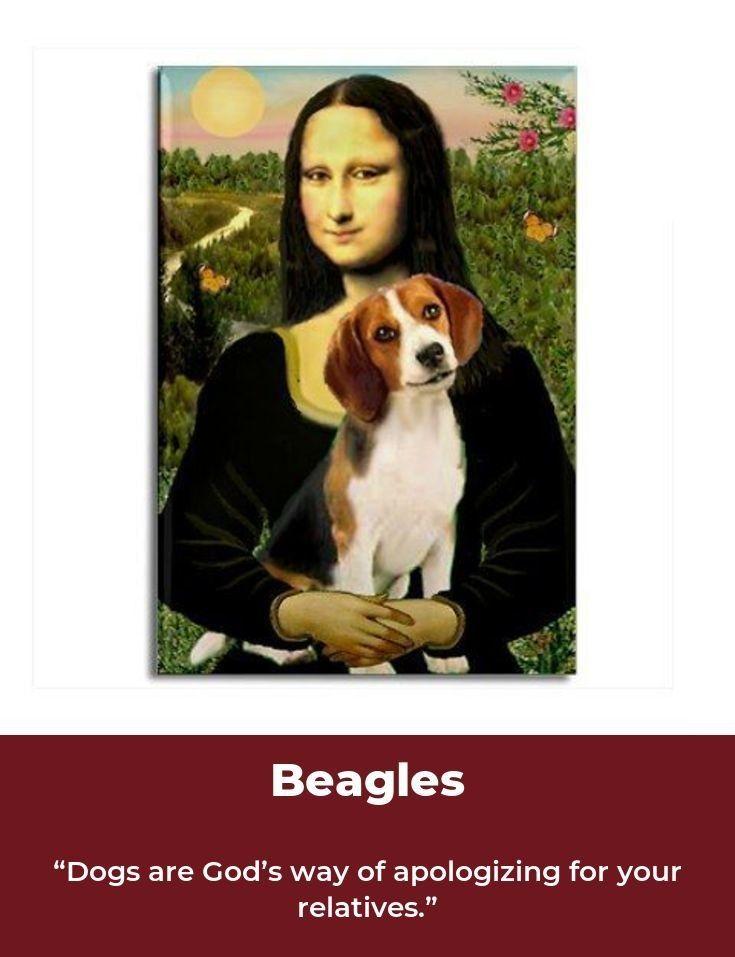 Beagle Beagleclub Beagles Memes Beagle Beagle Funny Beagle