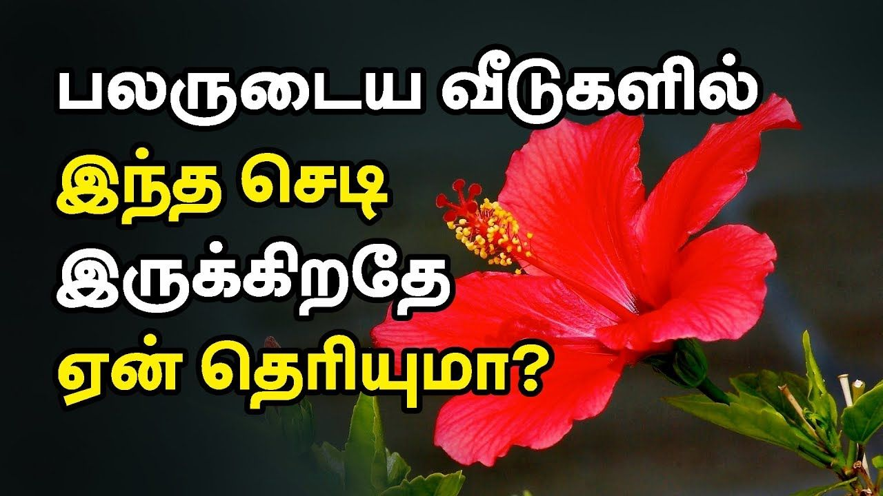 Pin On Tamil Health Tips