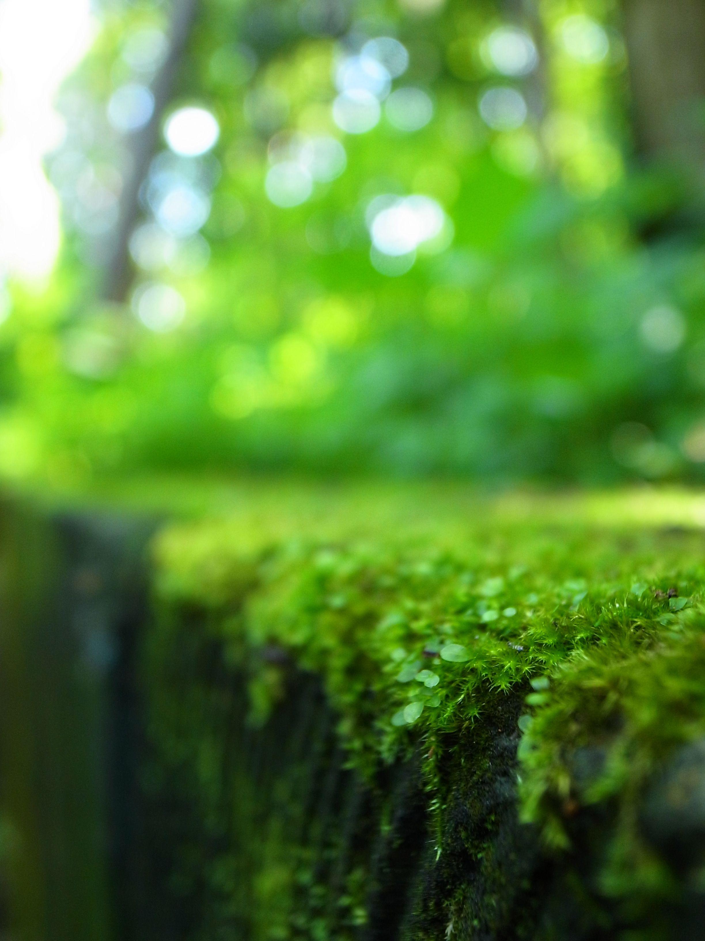 Pin By Usurp On Qiringreen Photoshop Digital Background Photo Background Images Background Images