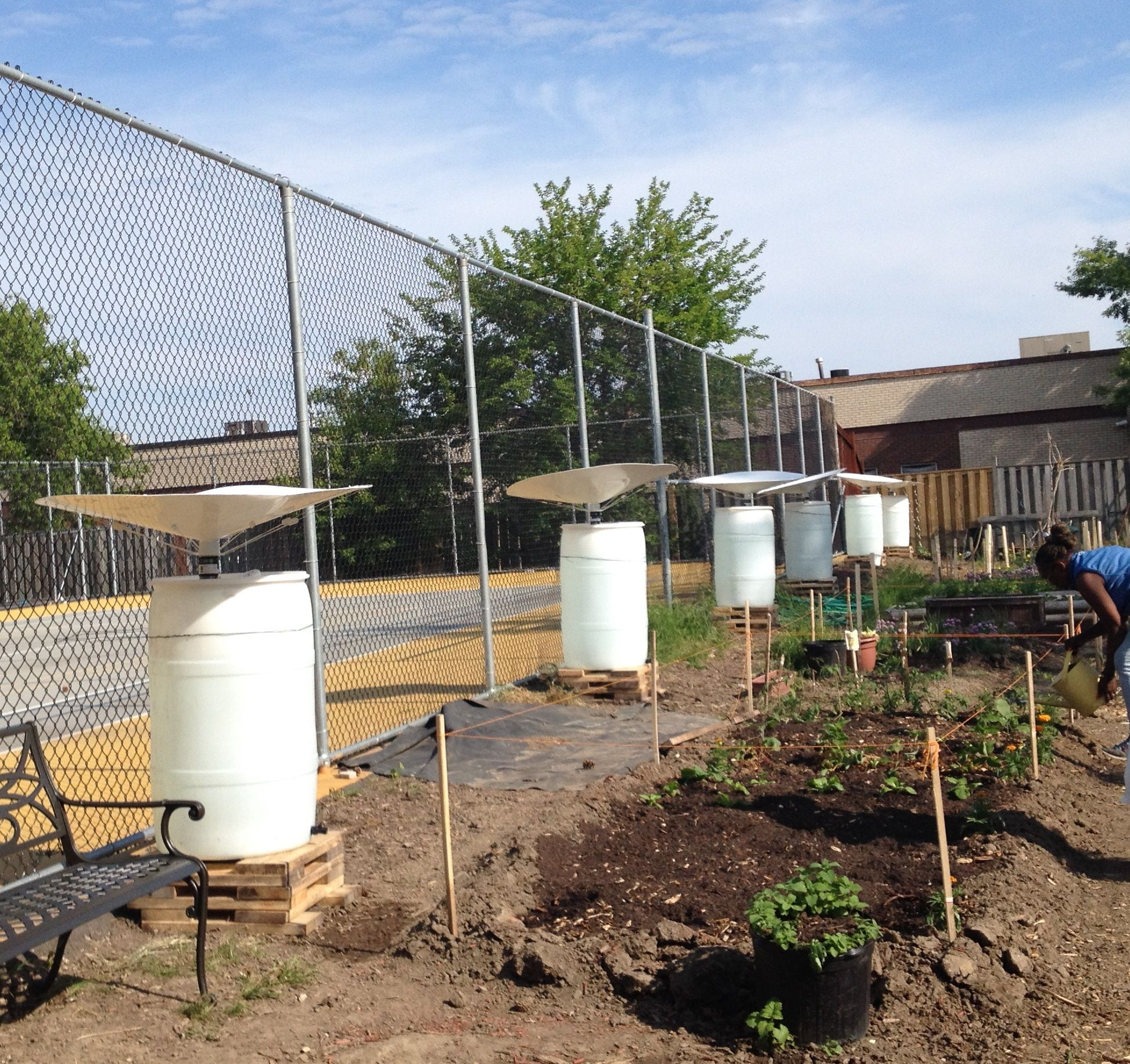 Community Garden in Toronto uses an array of RainSaucers
