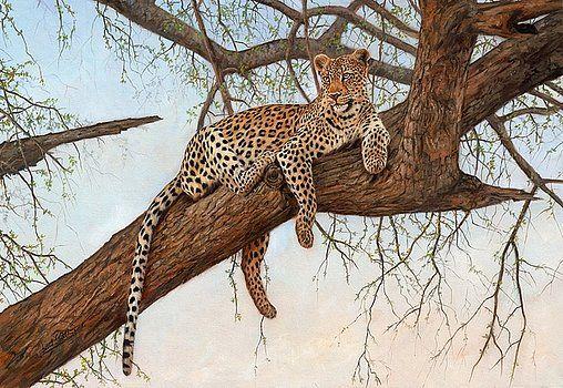 Leopard In Tree by David Stribbling