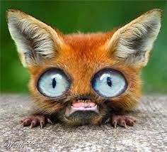 Weird Animals With Big Eyes 7
