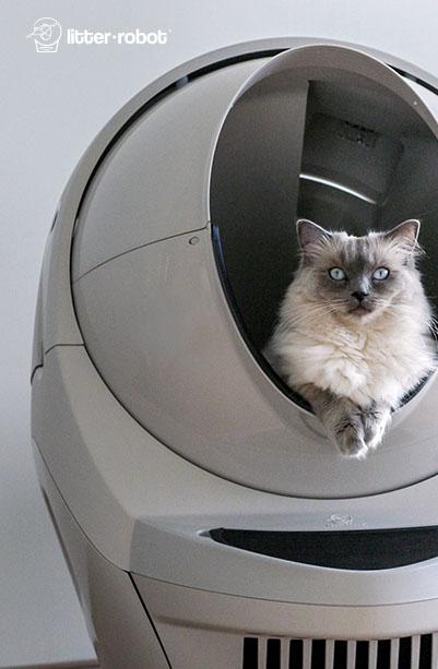 Why Arthritis In Cats Is Undertreated Sick Cat Litter Robot Sick Cat Symptoms