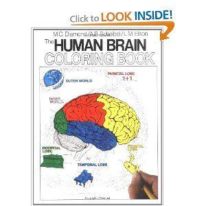 The Human Brain Coloring Book (Cos, 306): Marian C. Diamond, Arnold B. Scheibel: 9780064603065: Amazon.com: Books