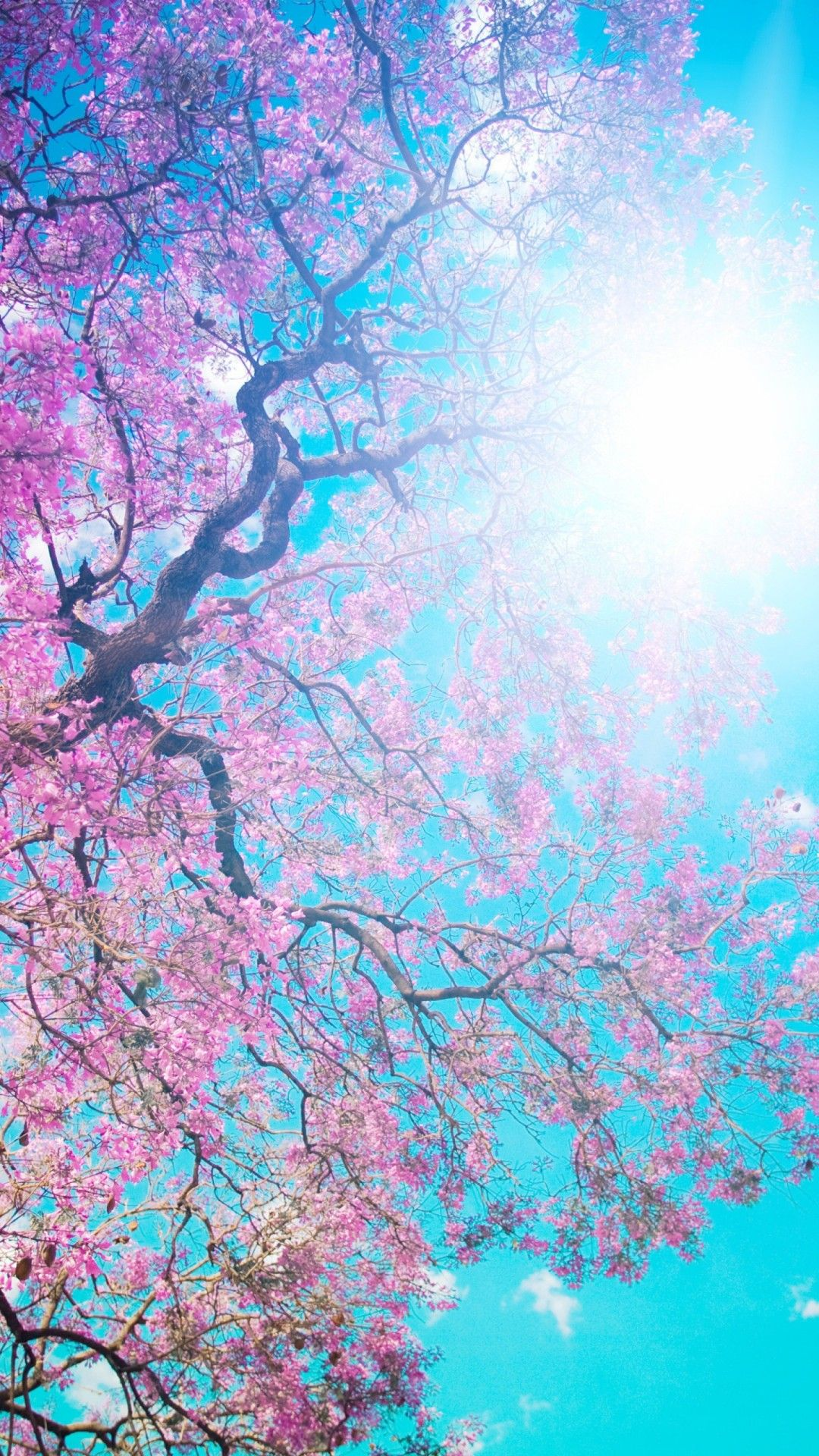 Pink Flowers Beauty In Its Maximum Expression Pinterest Wallpaper