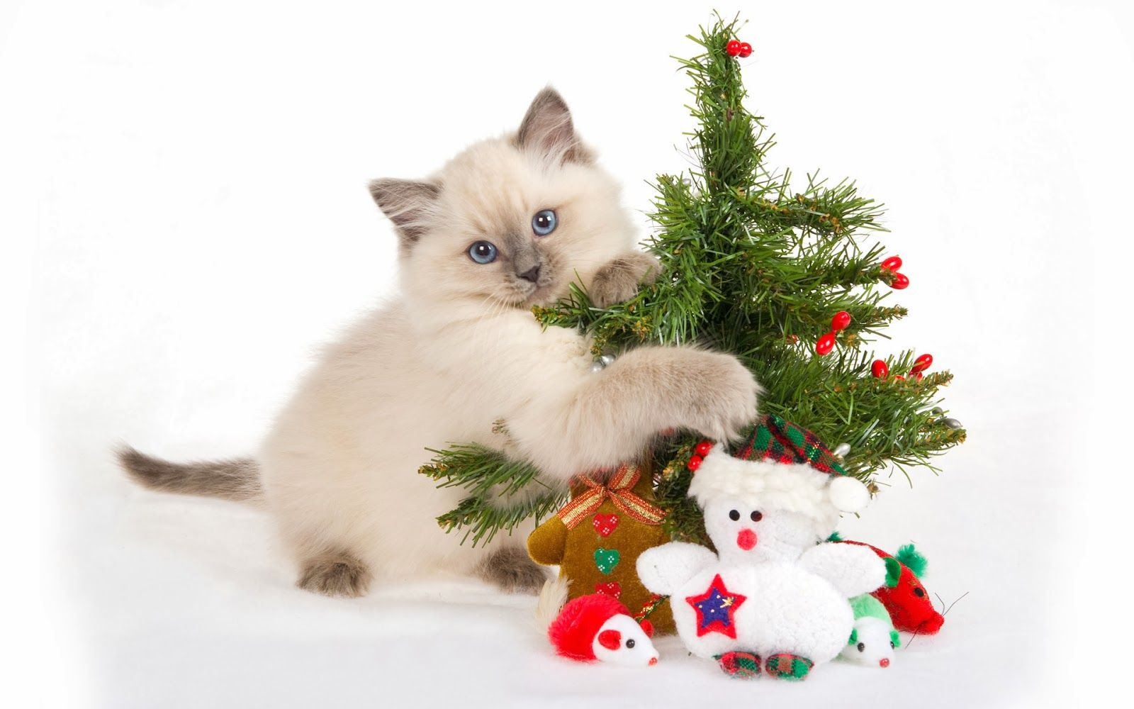 Christmas Gifts For Cat Lovers Happy Christmas Wallpapers Cute Christmas Backgrounds Christmas Kitten Christmas Cats