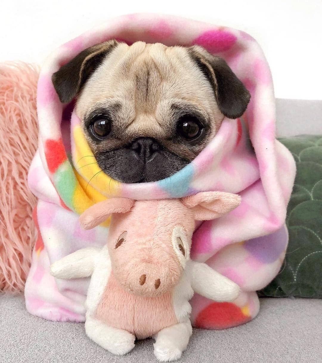This Lil Pug Puppy Wants To Help You Go Grocery Shopping Baby