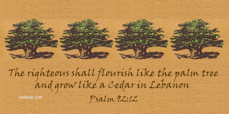 Cedar of Lebanon in the Bible - Psalm 92:12 | Psalm 92, Psalms ...