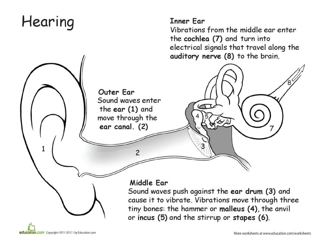 Ear Cworksheet
