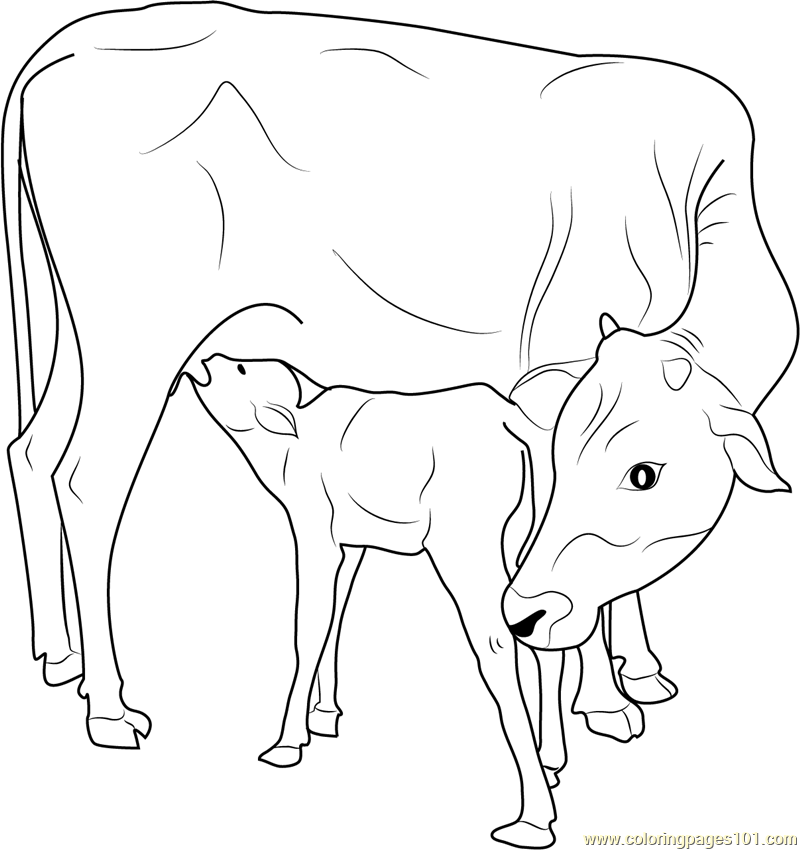 Indian Cow with Calf coloring page Free Printable Coloring Pages