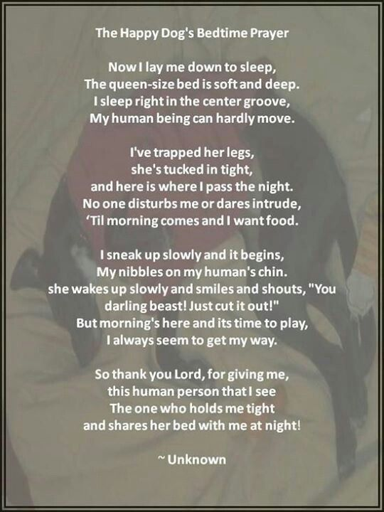Cute dog bedtime poem | Happy dogs, Bedtime prayer, I love ...