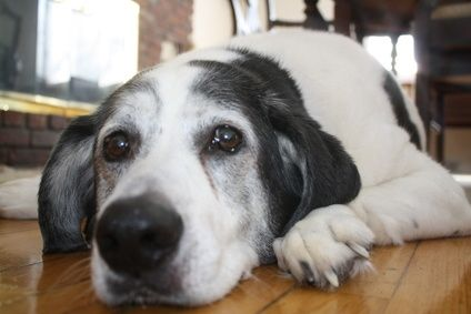 How To Remove Dog Urine Odor From A Tile Floor