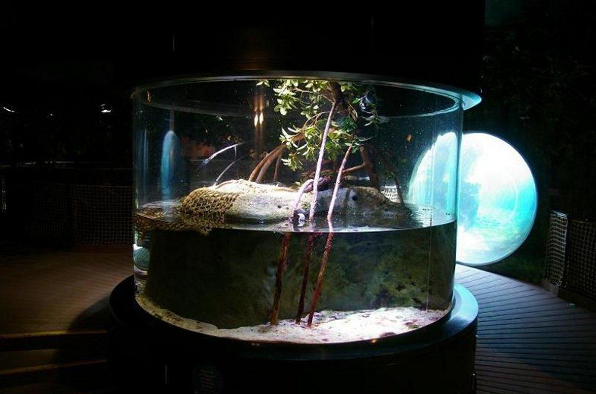 Fiddler Crab Amp Four Eyed Fish Tank Aquarium Ideas