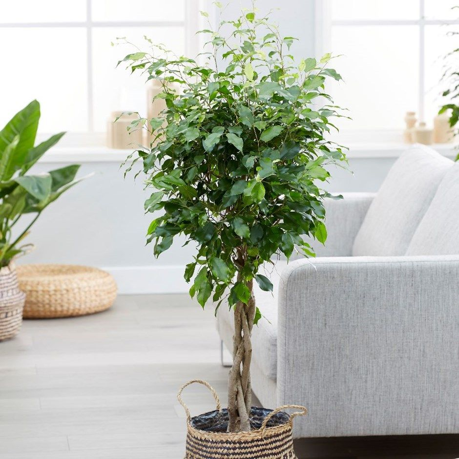 Houseplants That Can Clean The Air And Are Basically