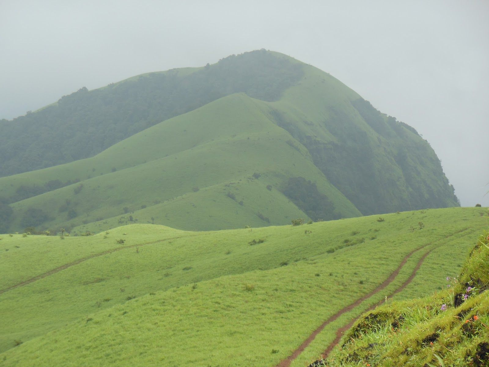 Kodachadri Is A Mountain Peak With Dense Forests Elevation - Metres above sea level