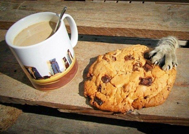 9.Na calada da manhã, um gato prestes a cometer o crime perfeito