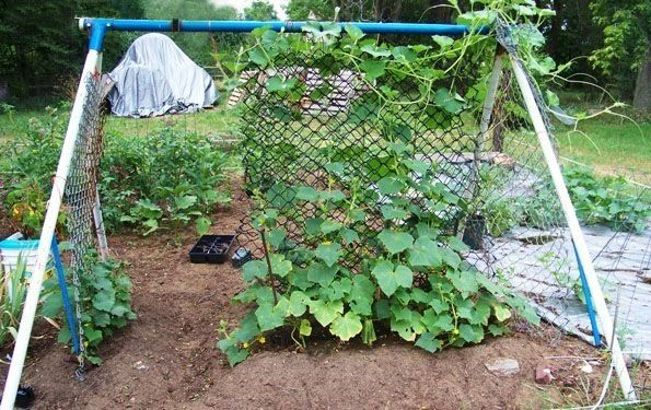 vegetable garden trellis ideas inexpensive what are some