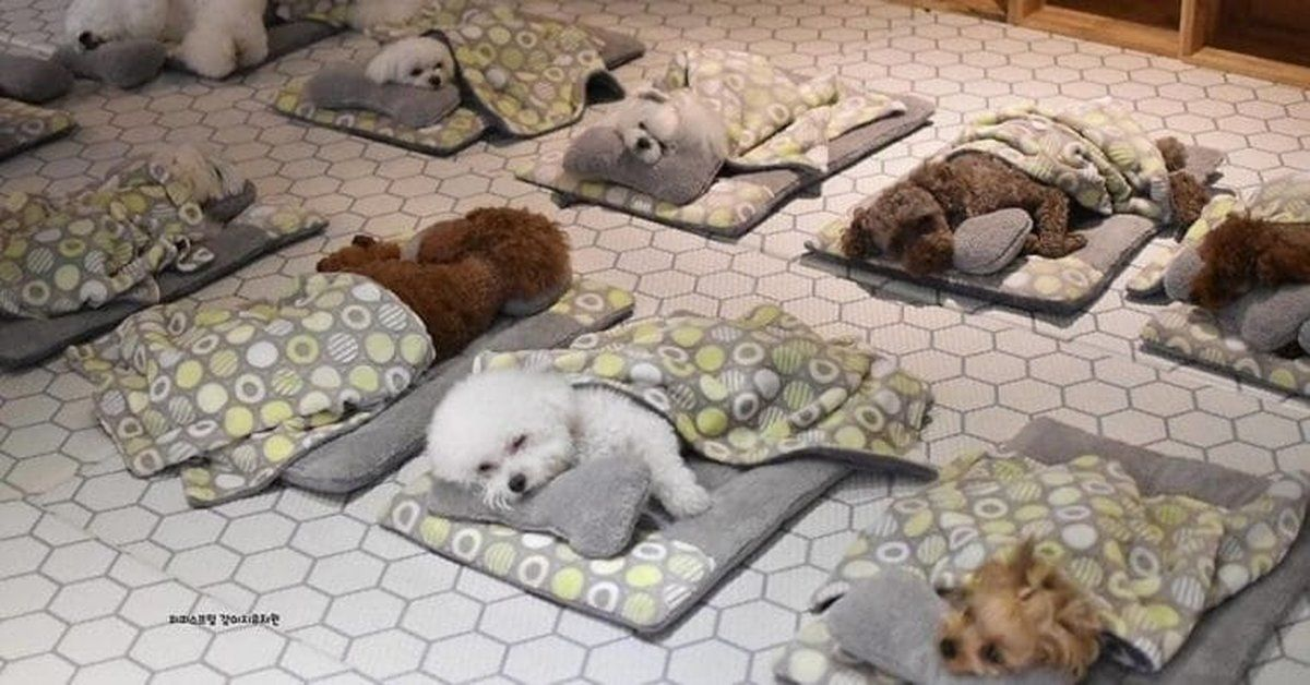 Doggie Daycare In South Korea Shares Adorable Photos Of