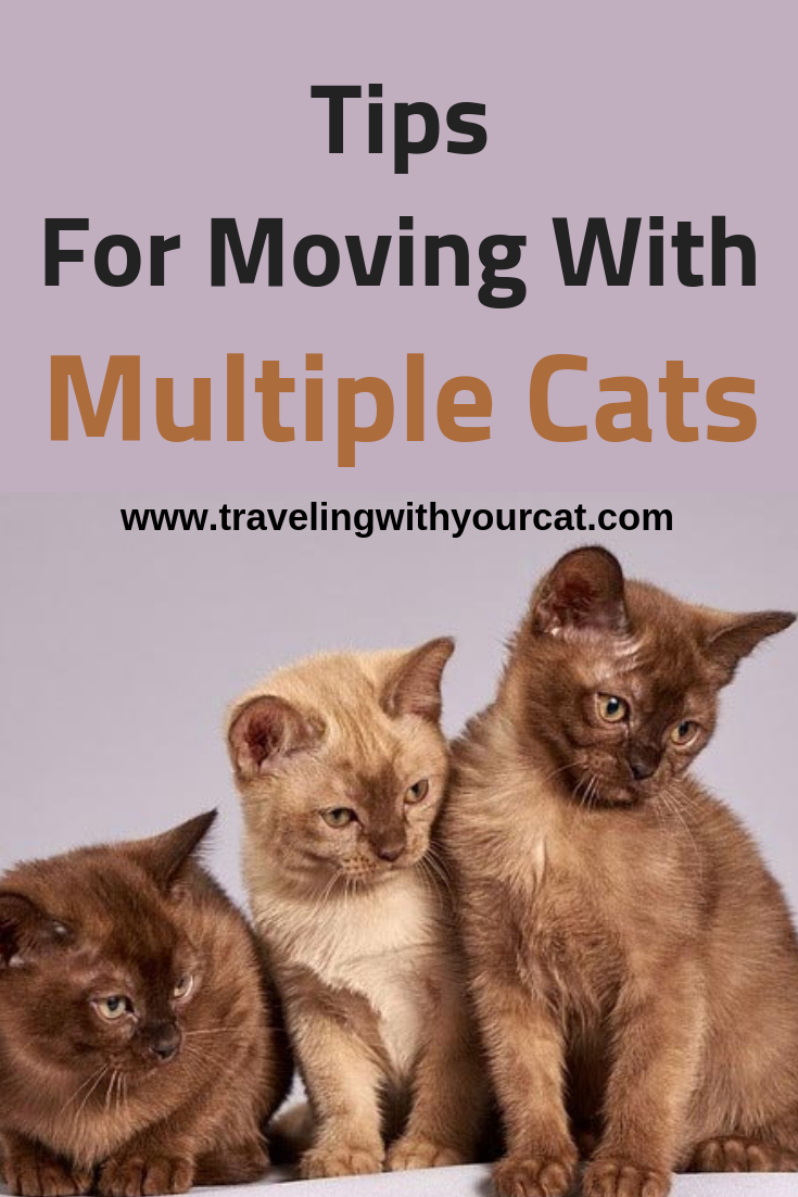 Tips For Moving With Multiple Cats Cat Travel Moving Cross Country