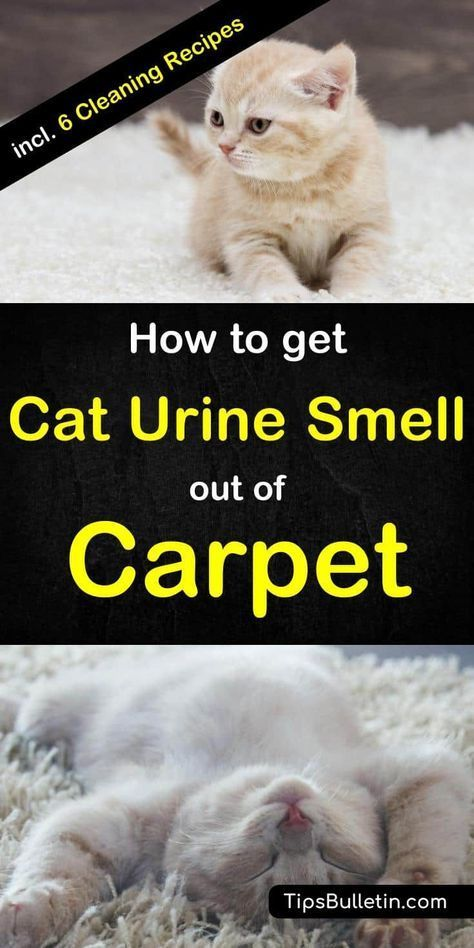 6 Clever Ways To Get Urine Smell Out Of Carpet Cat Urine