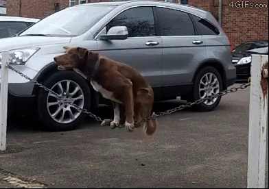 How talented is this pooch?? Incredible!!  via:  http://more.pet/2duimaS https://video.buffer.com/v/57f5d7beac3c84b3326a0ae5