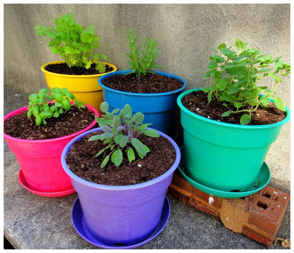 30 Amazing Ideas For Growing A Vegetable Garden In Your: 10 Great Friends: Veggie Garden Companion Plants
