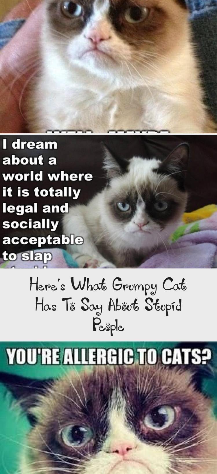 Photo of Esto es lo que Grumpy Cat tiene que decir sobre las personas estúpidas – CATS